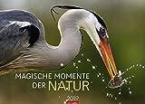 Magische Momente der Natur - Die schönsten Tierfotografien - Kalender 2019 - Weingarten-Verlag - Wandkalender 68 cm x 49 cm