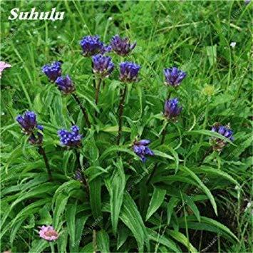 100 Pcs Largeleaf bleu gentiane Graines rares Gentianopsis Graines de fleurs vivaces Bonsai plantes pour jardin Décor Livraison gratuite 6