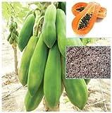 #9: Thai Papaya Seeds Hybrid Variety Dwarf Fruit 50 Seeds Packet