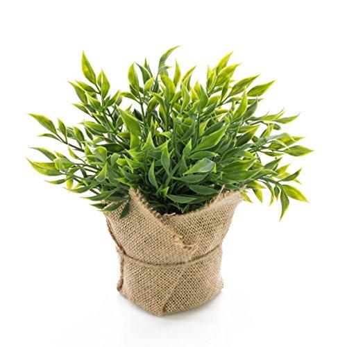 artplants Fragon Faux Houx Artificiel Vitus dans Son Sac de Jute, Vert, 22cm - Plante aromatique...