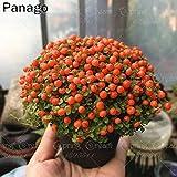 Pinkdose 100pcs Nertera perla del fiore arancione bonsai pianta rara in vaso bonsai fiore per il giardino domestico di balcone piante perenne fiore della perla: 1