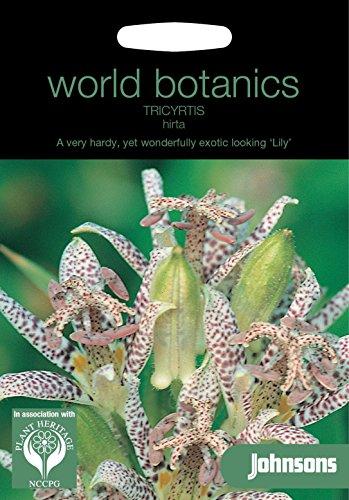 Johnsons Monde Botanics Fleur???Lot de g?n?rations???Tricyrtis ? H?riss?e???50?graines