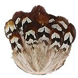ERGEOB Fasanenfeder Hühnerfeder Huhn Fiederpalme gefällt Feuer Huhn Feder-Kopfschmuck 5-8 cm (2-3 Zoll) Länge