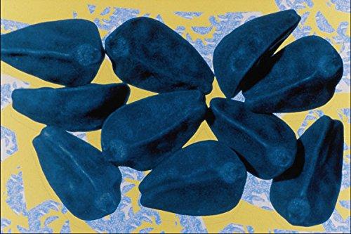 704094 Morning Glory Seeds (Ipomoea Purpurea) A4 Photo Poster Print 10x8 -