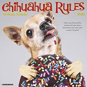 Chihuahua Rules 2020 Calendar