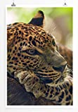 Eau Zone Bilder - Tierbilder – Jaguar auf Baum- Leinwand Kunstdrucke Wandbilder aus Deutschland