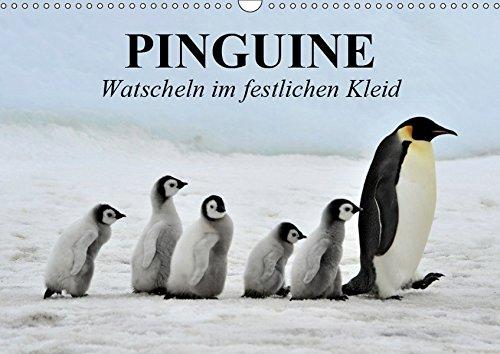 Pinguine - Watscheln im festlichen Kleid (Wandkalender 2019 DIN A3 quer)