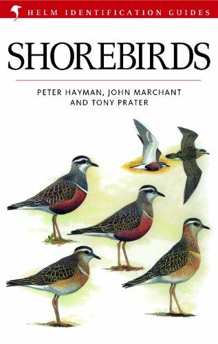Shorebirds (Helm Identification Guides) (English Edition)