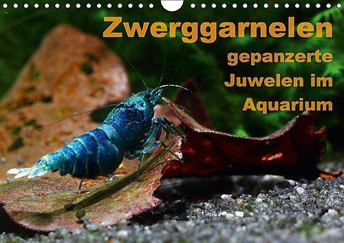 Zwerggarnelen - gepanzerte Juwelen im Aquarium (Wandkalender 2017 DIN A4 quer): Ein Jahr lang jeden Monat eine wunderschöne Garnele (Monatskalender, 14 Seiten ) (CALVENDO Tiere)