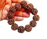 Best Bracelets For 4 - 4 Mukhi(Face) Rudraksha 14-16 mm 12 NEPAL beads Review