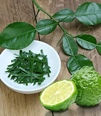 BALDUR-Garten Kaffir-Limette, 1 Pflanze Citrus hystrix von Baldur-Garten auf Du und dein Garten