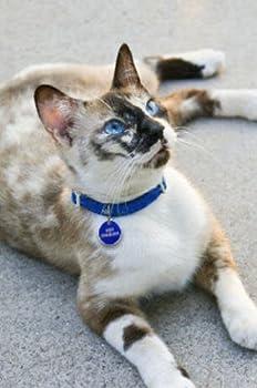 Collier chat élastique NOIR
