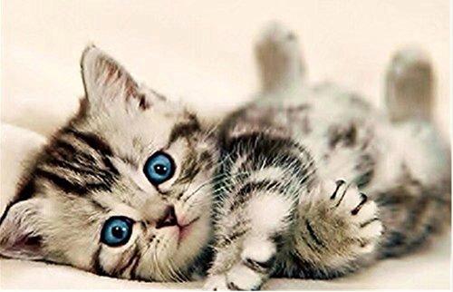 Esoor 5D Mantel con Gato