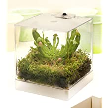 suchergebnis auf f r fleischfressende pflanzen terrarium. Black Bedroom Furniture Sets. Home Design Ideas