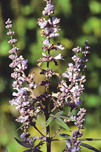 Vitex Agnus Castus Mok Pepper Journal: Take Notes, Write Down Memories in this 150 Page Lined Journal
