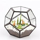 Cristal transparente Pentagon Dodecaedro geométrico terrario suculenta terrario, small