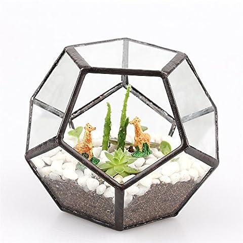 Mini Clear Dodecahedron Pentagon Glass Geometric Terrarium Small for Succulent Plant Glass Vase 11 cm width X 11 cm Length X 9 cm Height