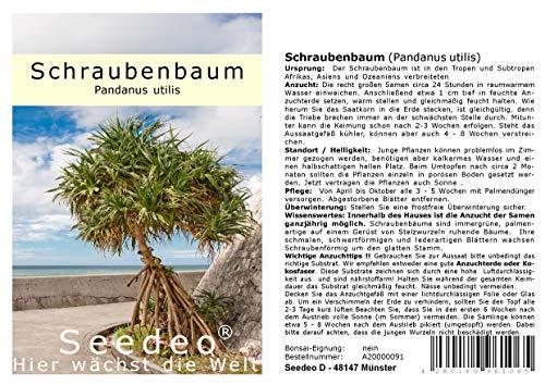 Seedeo® Schraubenbaum (Pandanus utilis) 5 Samen