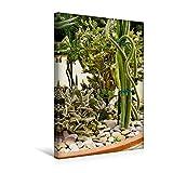 Calvendo Premium Textil-Leinwand 30 cm x 45 cm hoch, Ein Motiv aus Dem Kalender Exotische Pflanzenwelt | Wandbild, Bild auf Keilrahmen, Fertigbild auf Echter Leinwand, Leinwanddruck Natur Natur