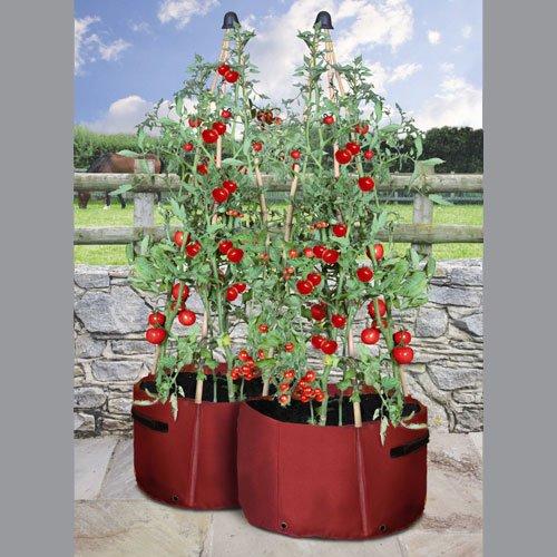 pomodori-vasi-confezione-da-2