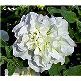 Nuevas semillas frescas 200 semillas de la petunia de las PC, interior Semillas Bonsai de flores, semillas de flor de la petunia mezcla petunia H jardín de la planta en maceta 15