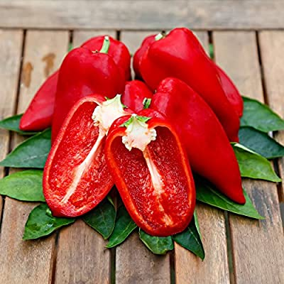 Gärtner Pötschke Paprikasamen Snacking Red F1 von Gärtner Pötschke bei Du und dein Garten