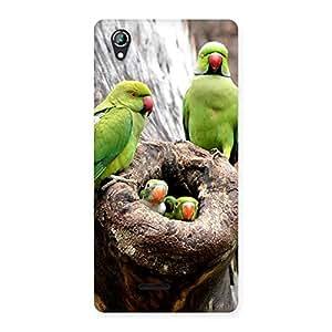 Stylish Parrot House Multicolor Back Case Cover for Lava Iris 800