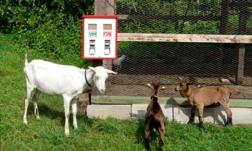 1 Tierfutterautomat Automat braun/beige für Fischfutter Wildfutter Ziegenfutter Pferdefutter Kamelfutter usw.