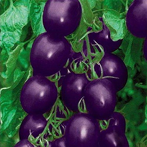 Inovey 20 Stücke Lila Tomatensamen Kirschtomaten Balkon Bonsai Bio-obst Kirschgarten Samen