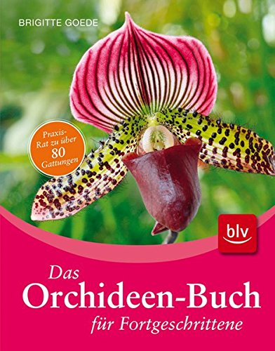 Orchideen fürs Zuhause