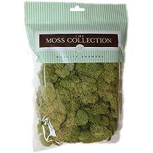 Qualität blumenzüchtern Spring green-reindeer Moos, Acryl, mehrfarbig
