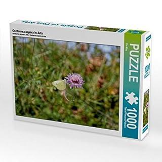 Centaurea aspera in Arta 1000 Teile Puzzle quer