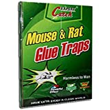 Musthaves Set Of 2 Large Size Mouse, Rat,Cockroaches Chipkali Insects Trap Adhesive Glue Board Trap - Kills Without Poison (21 cm X 32 cm )