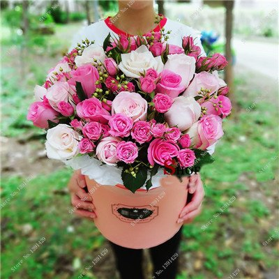 Exotique Rosas / Rose semences vivaces Jardin des plantes Bonsai Fleur, Pots de fleurs Pots décoratifs Aménagement paysager 120 Pcs / Sac 13