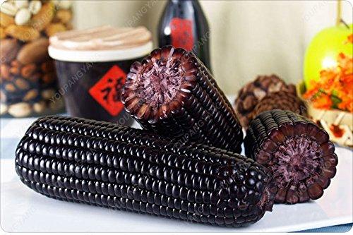 Nicht-gvo-mais (20 Samen / Packung seltene schwarze Mais Samen essbar Nicht-GVO-Gemüse Bonsai Samen für Happy Farm freies Verschiffen)
