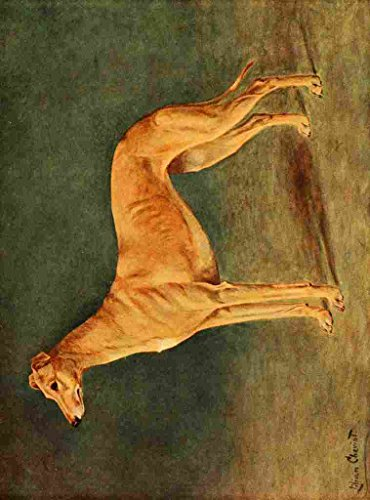 a4-photo-cheviot-lilian-1884-1932-new-book-dog-1911-greyhound-print-poster