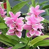 #10: Kraft Seeds Carcuma Flower Bulbs (Pink, Pack of 3 Bulbs)