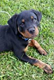 #9: So Cute Rottweiler Puppy Dog Pet Lined Journal