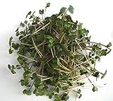 BIO Keimsprossen Senf 250 g Samen für die Sprossenanzucht Sprossen Microgreen Mikrogrün