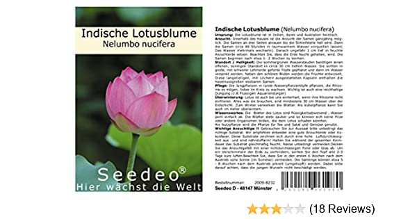 Echte indische Lotusblume Lotus MIX 5-20 Samen Nelumbo nucifera