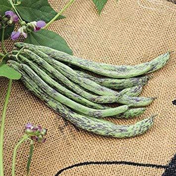 Bean Bonsai Bio-Gemüse Bonsai Phaseolus Vulgaris Pflanze Grüne Bohnen Bonsa natürliches Wachstum Pflanze für Hausgarten-20 PC/Beutel: 3