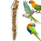 Greenlans Portatile in acciaio INOX spirale mangiatoia per uccelli pappagallo giocattolo per frutta cibo per Parrot parrocchetto Budgie Cockatiel Conure africano grigio cacatua Macaw