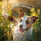 AniForte Wurm-Formel 20 g- Naturprodukt für Hunde - 4