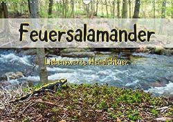Feuersalamander - Liebenswerte Heimlichtuer (Wandkalender 2020 DIN A3 quer)