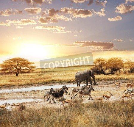 """Leinwand-Bild 80 x 80 cm: """"safari"""", Bild auf Leinwand"""