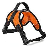 Hundeweste Harness Pet Dog Brustgurt mit Zugseil Explosionsgeschützt Rushing Pet Supplies Pet Hund Zugseil,Orange,L