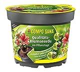 COMPO SANA® Qualitäts-Blumenerde im Pflanztopf, hochwertige Universalerde im Topf zum einfachen Bepflanzen und Umtopfen, 3,5 L
