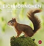 Eichhörnchen Postkartenkalender - Kalender 2018