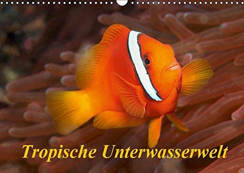 Tropische Unterwasserwelt (Wandkalender 2019 DIN A3 quer): Tropische Fische in faszinierenden Unterwasserfotos (Monatskalender, 14 Seiten ) (CALVENDO Tiere)