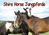 Shire Horse Jungpferde (Posterbuch DIN A2 quer): Wunderschöne ein- und zweijährige Shire Horse Jungpferde (Posterbuch, 14 Seiten) (CALVENDO Tiere) [Taschenbuch] [Nov 04, 2013] Stanzer, Elisabeth